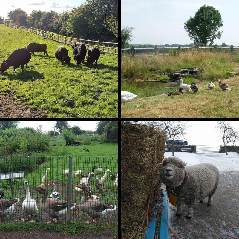 Grimsby Farm
