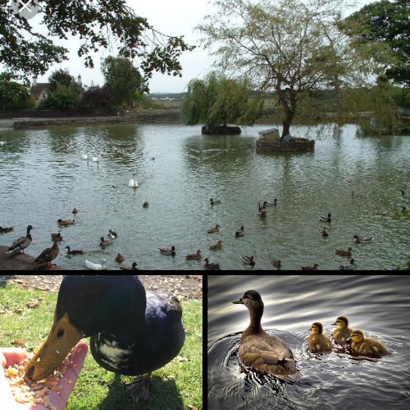 Winterbourne Duck Pond Near Bury Hill Farm